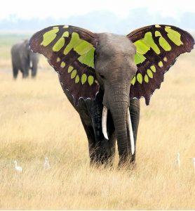 слон с крыльями